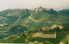 Vineyards around Castiglione Falletto