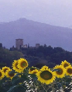 Umbria countryside with sunflowers and monastery in background